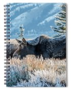 Moose In Cold Winter Ice Spiral Notebook