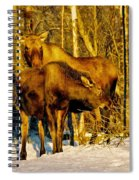 Moose In The Morning Spiral Notebook