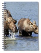Moose Mama With Her Calf Spiral Notebook