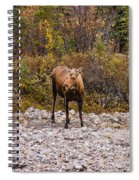 Moose Pawses In Mid-drink Spiral Notebook