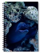 Moray Eel Or Muraenidae Fish Spiral Notebook