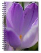 Morning Crocus One Spiral Notebook