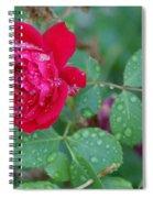 Morning Dew On A Rose Spiral Notebook
