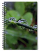 Morning Dewdrops 2 Spiral Notebook