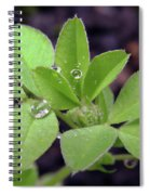 Dewdrops On Leaves Spiral Notebook