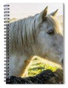 Morning Encounter Spiral Notebook