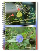 Morning Glories And Butterfly Spiral Notebook