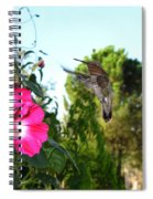 Morning Glories And Humming Bird Spiral Notebook