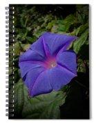 Morning  Glory -2 Spiral Notebook