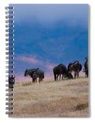 Morning In Ngorongoro Crater Spiral Notebook