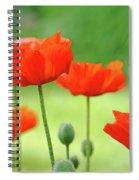 Morning Light Poppies Spiral Notebook