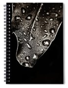 Morning Rain Sepia Toned Spiral Notebook