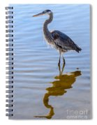 Morning Reflections Of A Great Blue Heron Spiral Notebook
