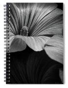 Morning Rose Mallow Spiral Notebook