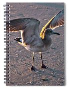 Morning Spread Spiral Notebook