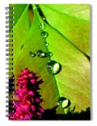 Morning's Glory Spiral Notebook