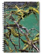 Moss And Trees Spiral Notebook