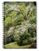Moss Covered Tree Spiral Notebook