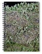 Moss Trees Spiral Notebook