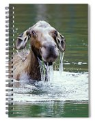 Mossy Moose Spiral Notebook