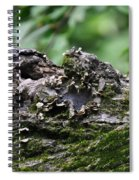 Mossy Tree Knot Spiral Notebook