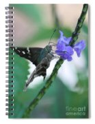 Moth On Blue Flower Spiral Notebook