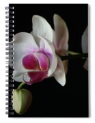 Moth Orchid 1 Spiral Notebook