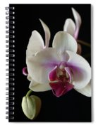 Moth Orchid 2 Spiral Notebook