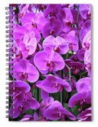 Moth Orchid Exuberance Spiral Notebook