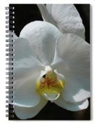 Moth Orchid Spiral Notebook