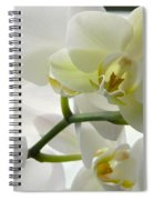 Moth Orchids - White Spiral Notebook