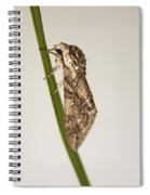 Moth Study 1 Spiral Notebook