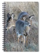 Mother And Young Spiral Notebook