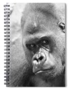 Mother Gorilla In Thought Spiral Notebook
