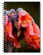 Mother Of Thousands Spiral Notebook