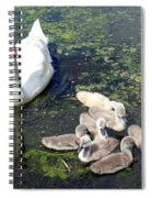 Mother Swan And Baby Cygnets Spiral Notebook