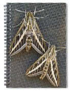 Moths Spiral Notebook