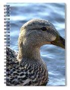 Mottled Duck Big Spring Park Spiral Notebook