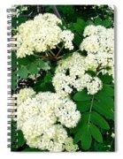 Mountain Ash Blossoms Spiral Notebook