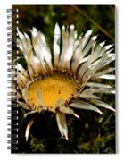 Mountain Thistle French Pyrenees Spiral Notebook