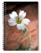 Mountain Beauty Spiral Notebook