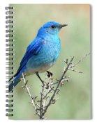 Mountain Bluebird Beauty Spiral Notebook