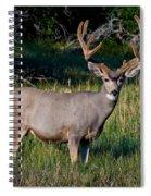 Mountain Buck  Spiral Notebook