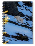 Mountain Goat And Larches Spiral Notebook