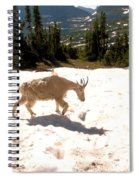 Mountain Goat Crossing A Snow Patch Spiral Notebook