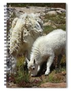 Mountain Goat Nanny And Kid Foraging At Columbine Lake - Weminuche Wilderness - Colorado Spiral Notebook