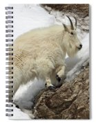 Mountain Goat With Grace Spiral Notebook