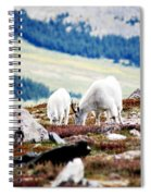 Mountain Goats 2 Spiral Notebook