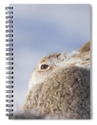 Mountain Hare - Scottish Highlands  #10 Spiral Notebook
