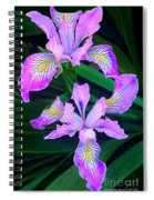 Mountain Iris In Flower California Spiral Notebook